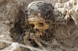 3525-skeleton-skull