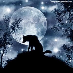 Ensam varg framför månen