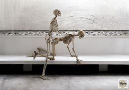 Skelett som gör det doggy style