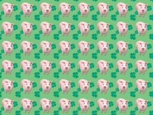 Ugly_Pig_Wallpaper