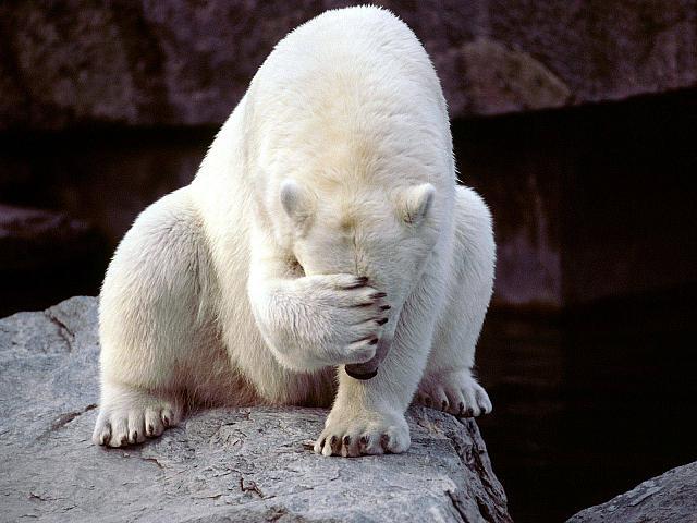 http://www.feelsengine.com/index.php/Facepalm/Polar-Bear-Facepalm